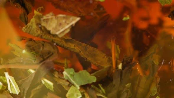 Thumbnail for Nahaufnahme, Löffel Rühren Tee. Teeblätter werden in einem Glaskelch gebraut. Kräutergetränk.