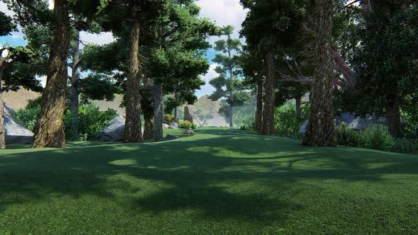 Thumbnail for Coniferous Forest Growing In The Mountains 4 K