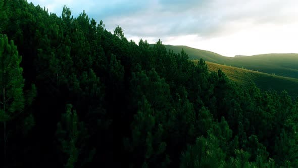 Thumbnail for Forest in the Mountains
