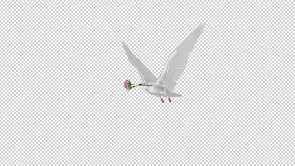 White Dove with Pink Rose - Flying Cycle - Side Angle II - 4K Transparent Loop
