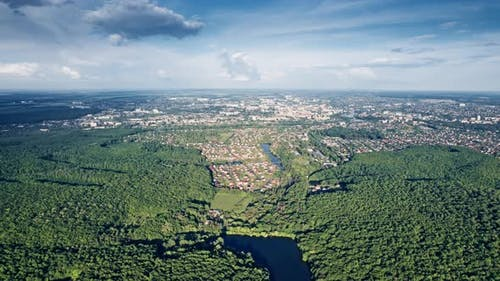 Luftaufnahme Sommerwald