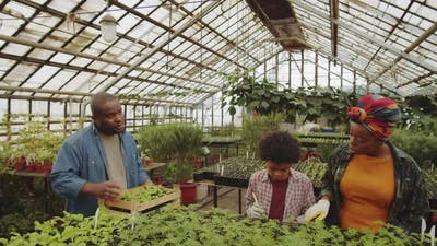 Afro-American Family Growing Plants in Greenhouse