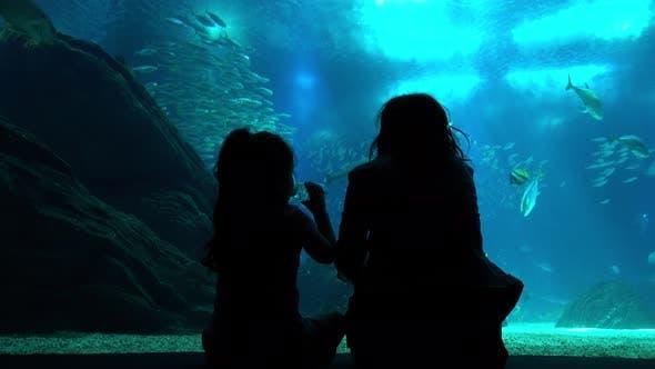 Thumbnail for Family at the Oceanarium