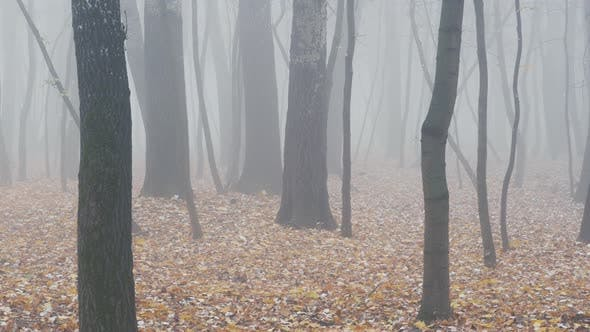 Thumbnail for Passing By Foggy Forest in the Morning. Strong Autumn Fog. Fog in the Autumn Beech Forest
