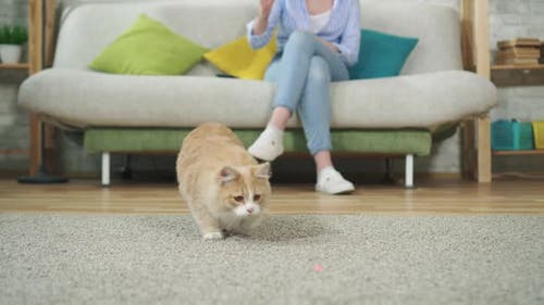 Young Woman Sitting on a Sofa Playing with a Cat Using a Laser Pointer