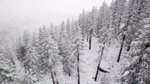 Thumbnail for Aerial Snow Covered Trees Landscape