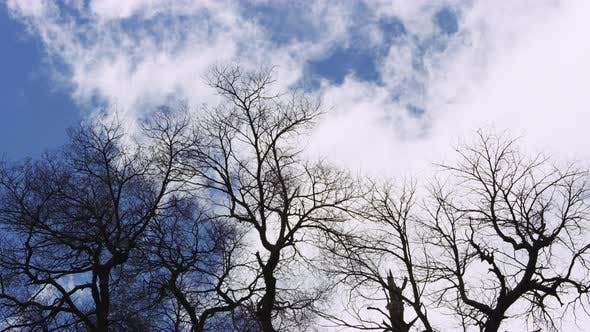 Thumbnail for Silhouettes of Dead-wood Braches Against Clouds and Blue Sky
