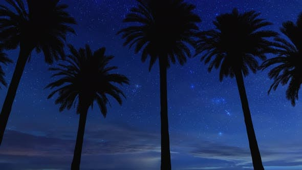 Driving Under Palm Trees In Night