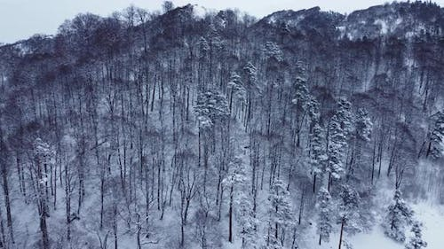 Snowy Winter Forest Aerial