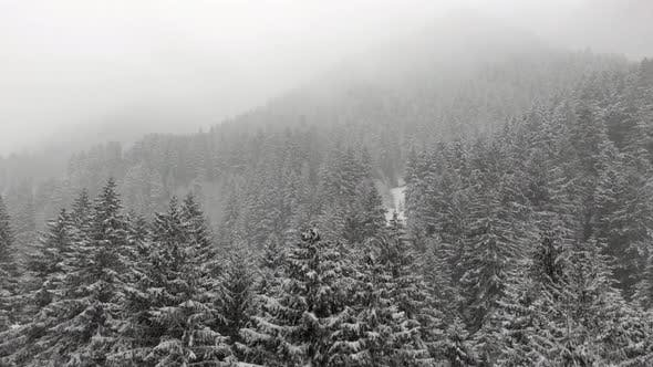 Thumbnail for Heavy Snowfall in the Forest