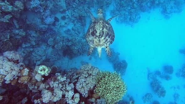 Thumbnail for Sea Turtle Diving