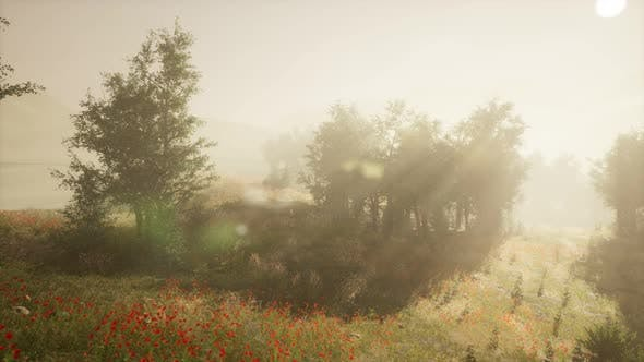 Thumbnail for Clearing in the Forest in Sunny Summer Morning