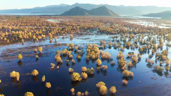 Thumbnail for Yellow trees in the blue water in autumn, on the flooded fields. Swamp and wetland by Lake Skadar.