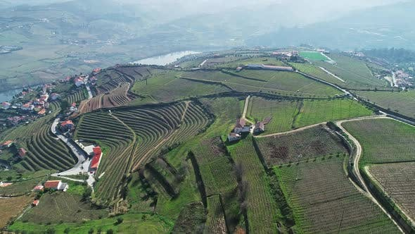 Thumbnail for Aerial of Douro Terraced Vineyards in Portugal