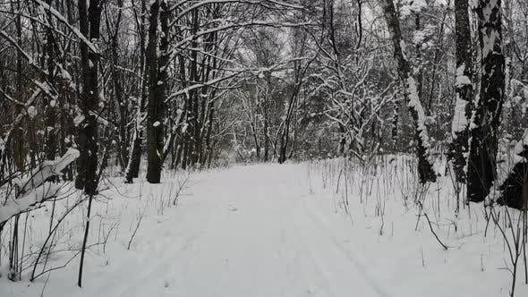 Walking in forest on hiking trail.
