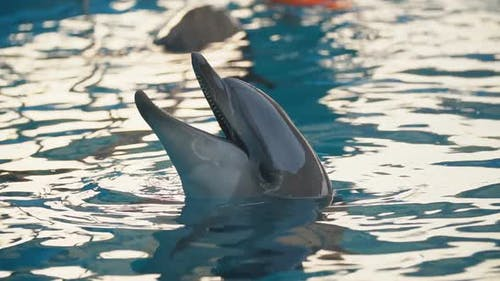 Dolphin in the Pool