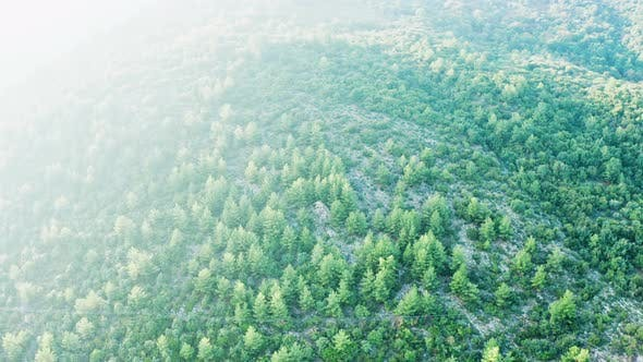 Thumbnail for Drone Flying Over Rocky Mountains with Pine Forest