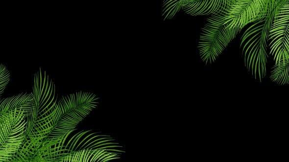Palm Leaves 02 HD