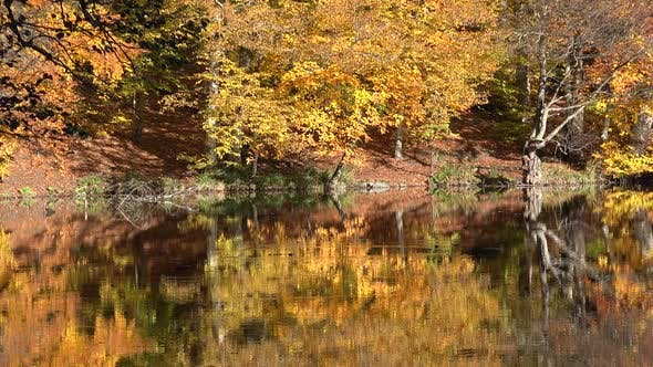 Reflection of Autumn Colors on the Lake Surface in the Fantastic Calm Forest
