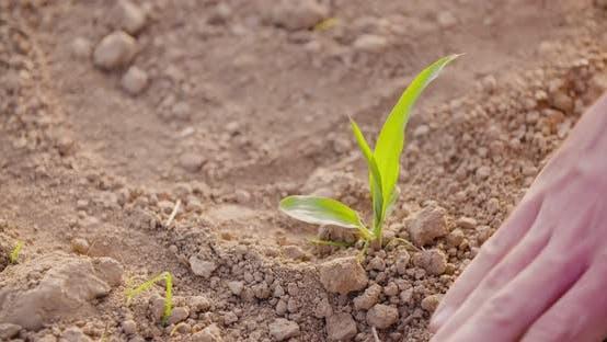 Thumbnail for Landwirt Pflanzung Jungweizen auf Bauernhof