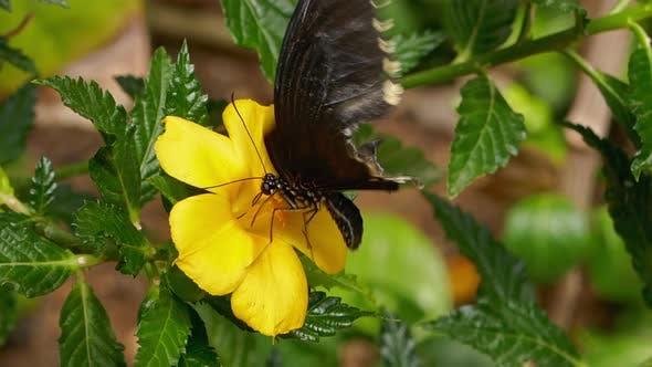 Papillon sur fleur jaune