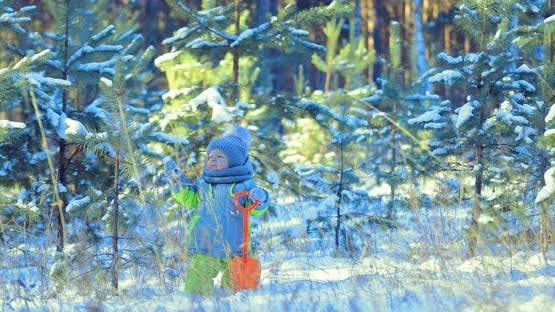 Child is Looking at the Firtree