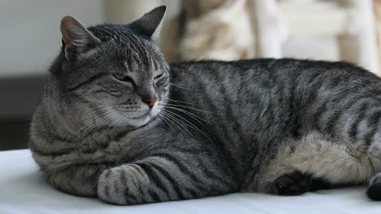 typical brindle cat relaxed on his kennel