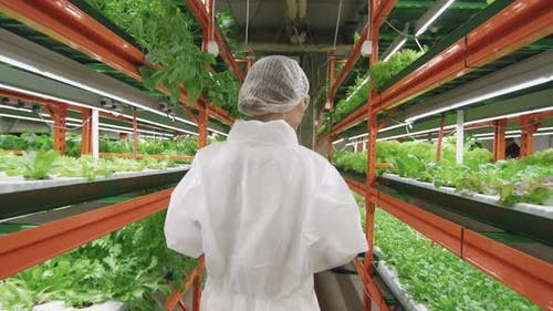 Agricultural Expert In Vertical Farm