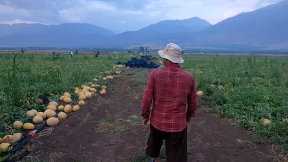 Thumbnail for Farmer Walking In Field