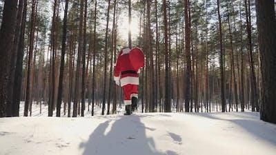 Santa Claus Walks Through the Snowy Pine Forest