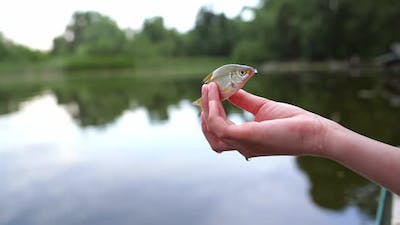 Fish in the hands close up. Close up view of nature fish held by a woman