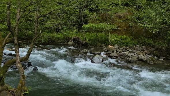 Thumbnail for Beautiful River Stream Flow Fast in Forest in Caucasus Mountains, Georgia