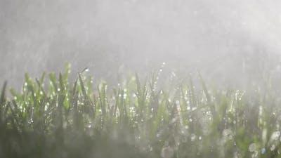 Fresh Watered Grass
