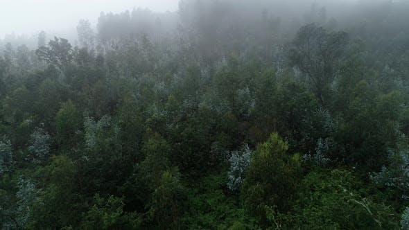Thumbnail for Aerial Forest Fog