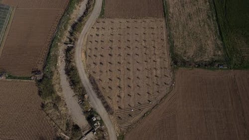 Newly Cultivated Agricultural Land