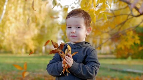 Children Play in the Park, Throw Yellow Autumn Leaves at a Smiling Boy, a Happy Baby, Happy Emotions