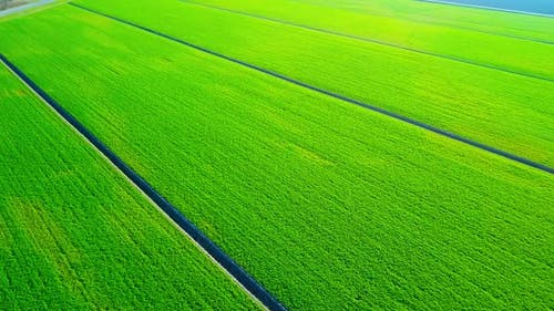 Juicy Fields with Early Sprouts Divided By Irrigation Canals