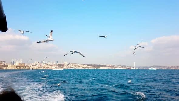 Thumbnail for Seagulls Flying Over Bosphorus
