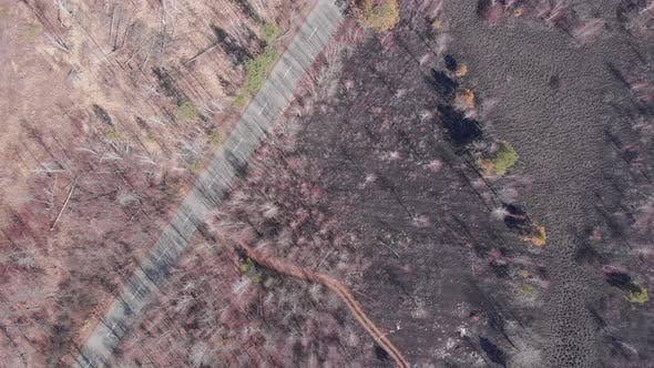 Forest covered with ash after fire from birds eye view. Environmental damage concept