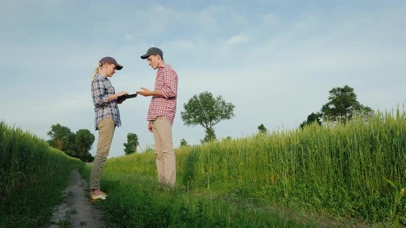 Thumbnail for Two Young Farmers Are Talking While Standing By a Field of Wheat