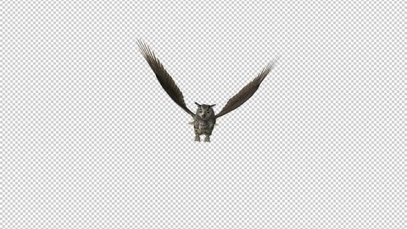 Owl - Horned - Flying Loop - Front View