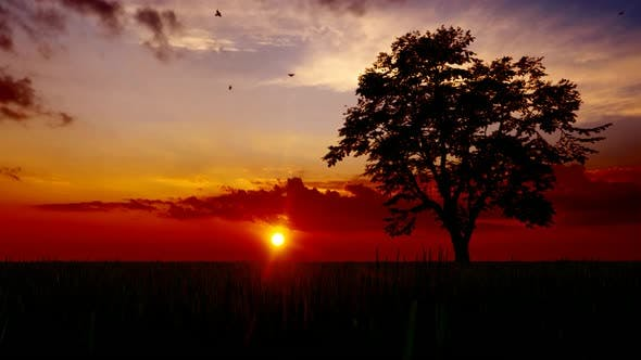 Sunset and Tree View