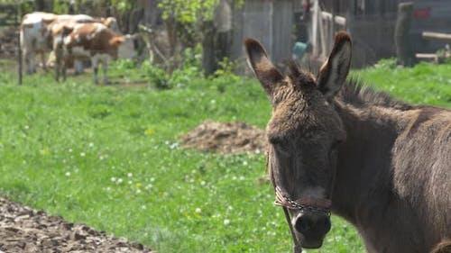 Donkey in a village