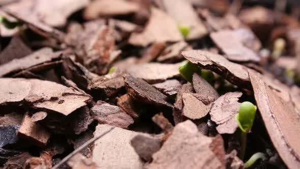 Thumbnail for Germinating Plant Timelapse