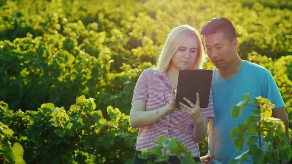 Cover Image for Asian Man and Caucasian Woman Work Together in the Garden, Use Tablet