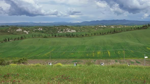 Thumbnail for Tuscany Panorama with Farmland Hill Fields