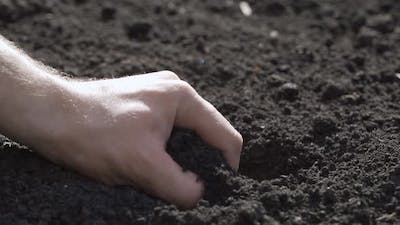 Hands Closeup of Male Hands Take Care of the Plant Loosen the Soil Improve the Soil Fertility