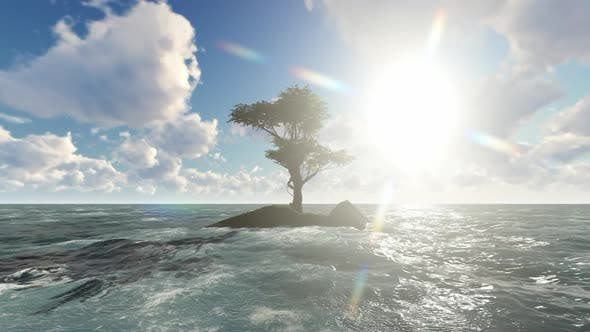 Thumbnail for Trees grow in the middle of the sea