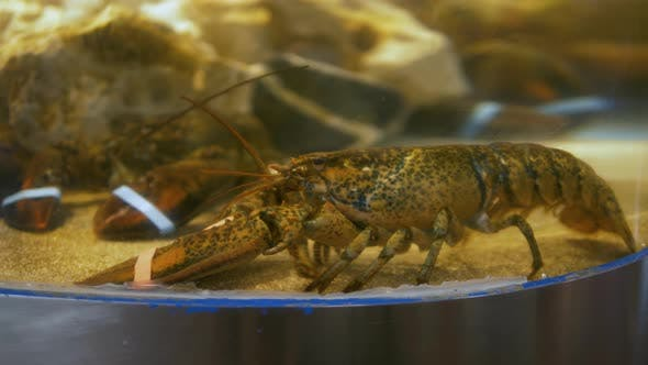 Cover Image for Fresh Crabs in Seafood Market