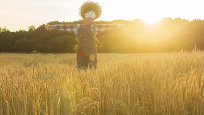 Scarecrow in a field at sunset